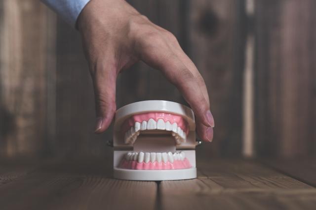 歯と歯肉(歯ぐき)の異常